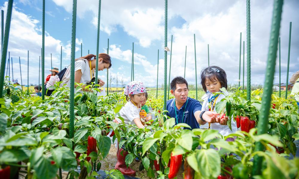 野菜収穫&バーベキュー体験