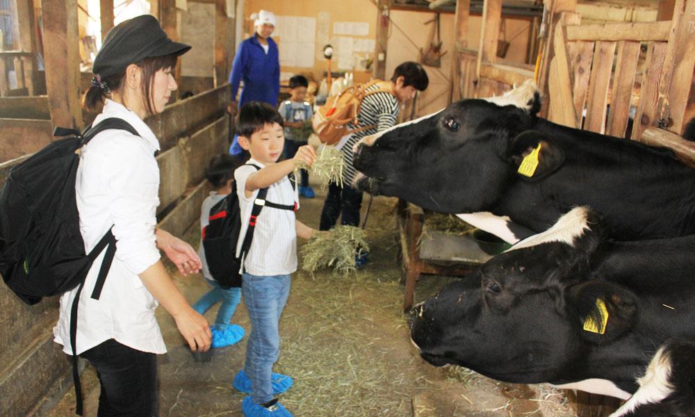 牛とふれあい エサやり体験【ソフトクリームまたはジェラート付き】